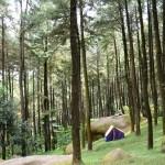 Mau Liburan ke Hutan Pinus? Siapkan 4 Benda Ini!
