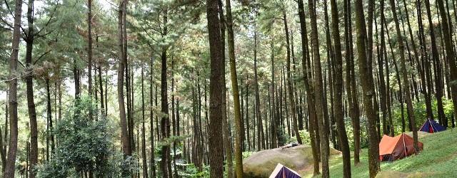 Liburan ke Hutan Pinus