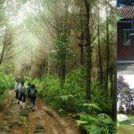 Serunya Trekking di Taman Hutan Jayagiri Lembang